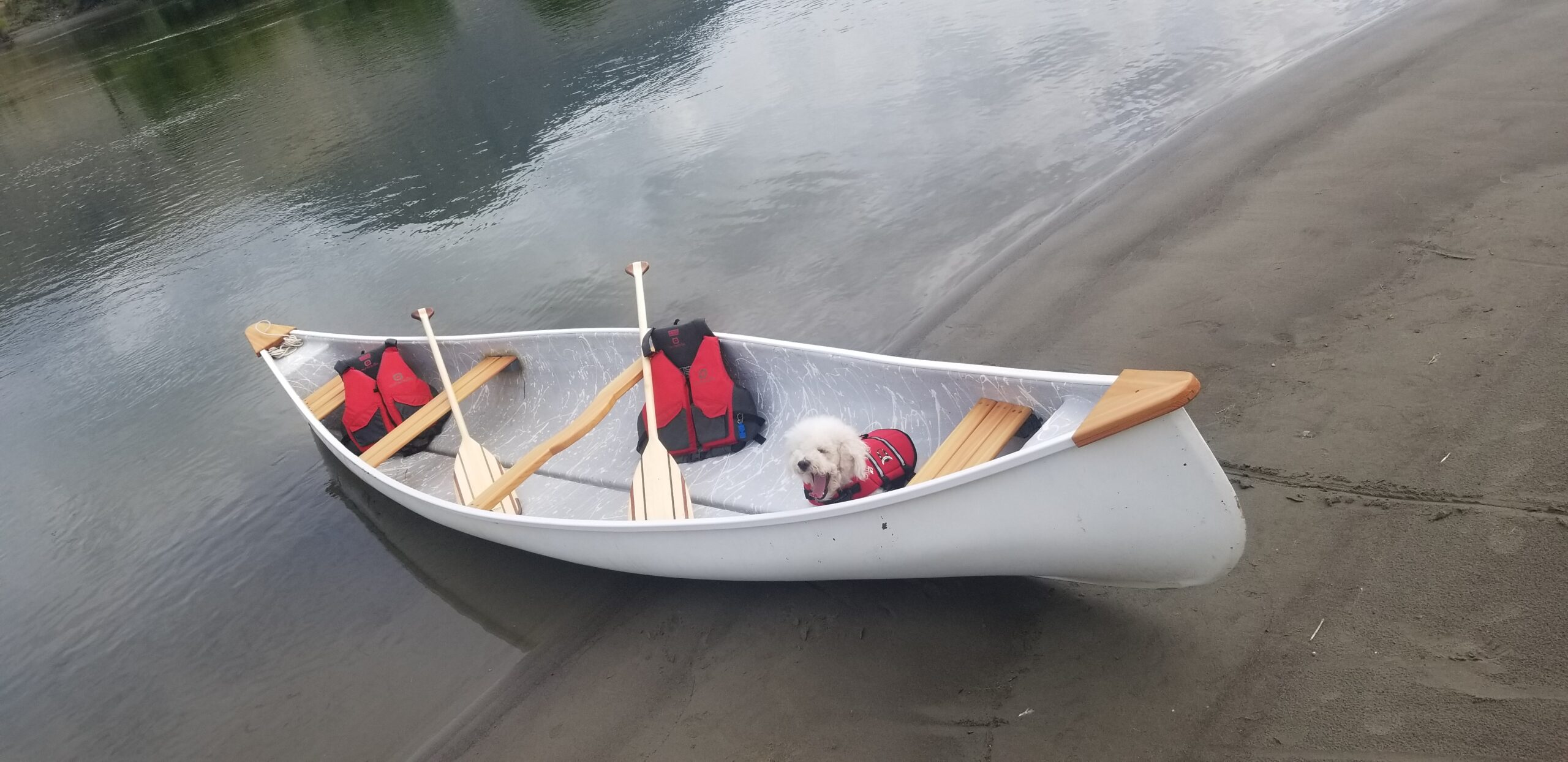 a dog in a canoe for rent by the beach